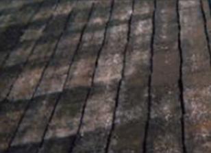 屋根のカビ・コケを放置した場合のリスク1